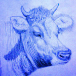 koe, cow, pencil, potlood, tekenen, drawing, arceren, tekening, illustration, illustratie